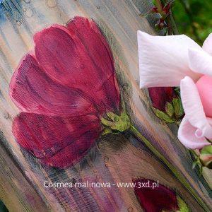 Cosmea malinowa - malowana na drewnie - podziękowania dla Rodziców